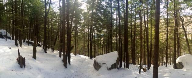 kearsarge-forest