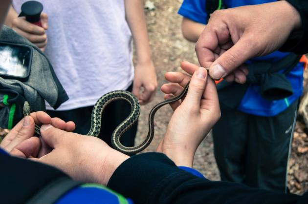 Fun with snakes