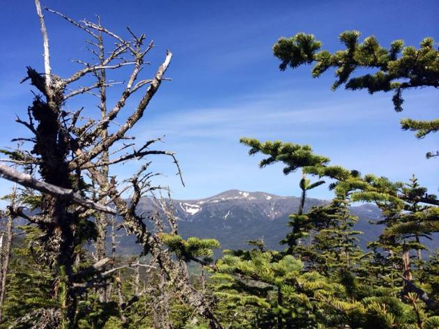 Mount Washington from Wildcat B