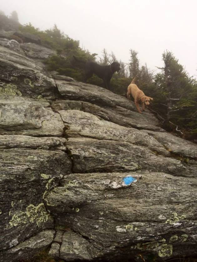 The Climbing Dogs