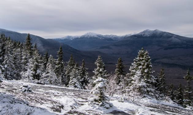 Presidentials from Mount Surprise
