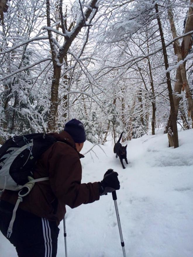 Dog running down snowy trail