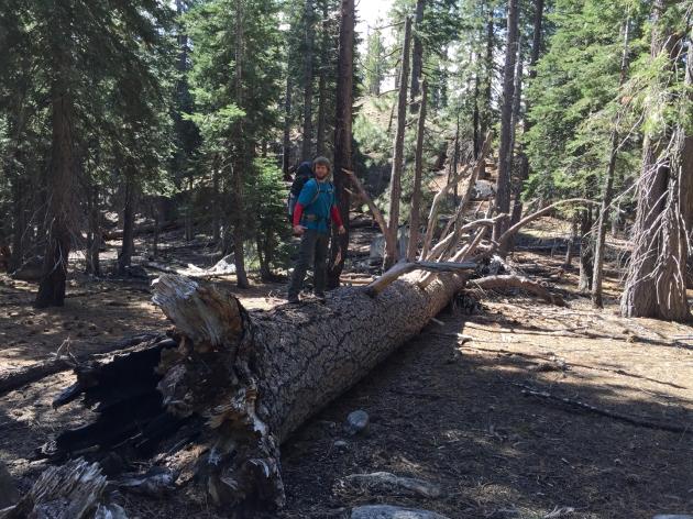 Me on a massive fallen tree