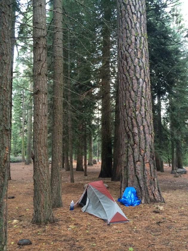 Tent at foot of giant tree