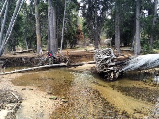 Person crossing creek by way of fallen tree