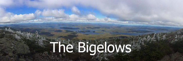 The Bigelows