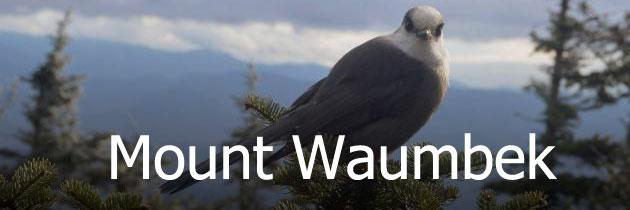 Mount Waumbek