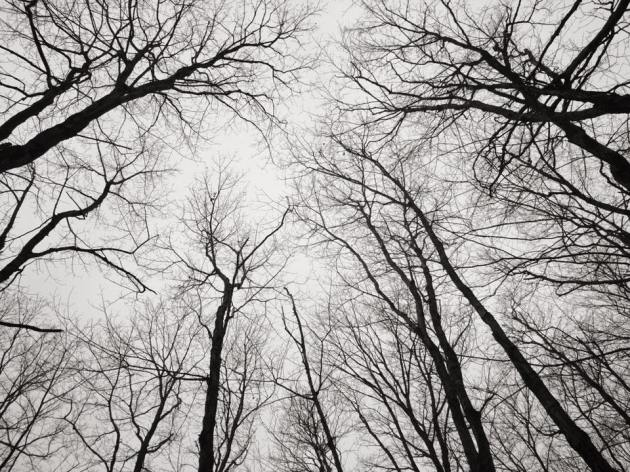 Trees and gloomy sky