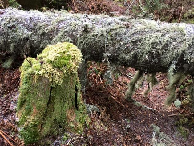 Mossy tree parts