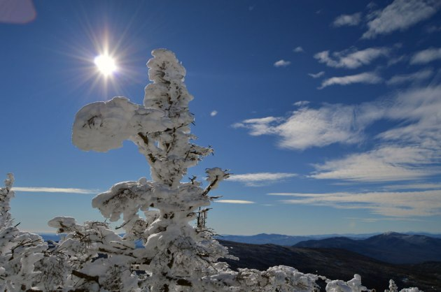 Bright sun and snow covered tree
