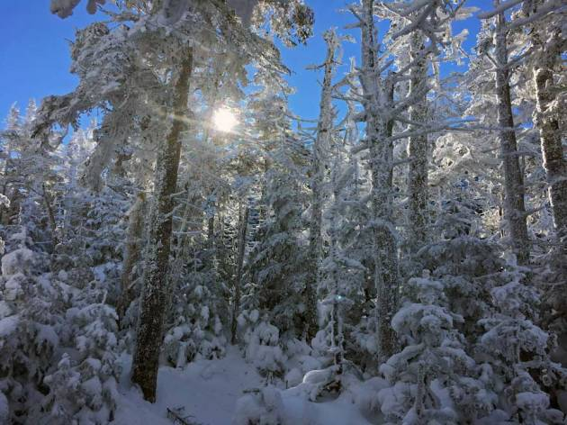Snow covered trees with clear sky and bright sun