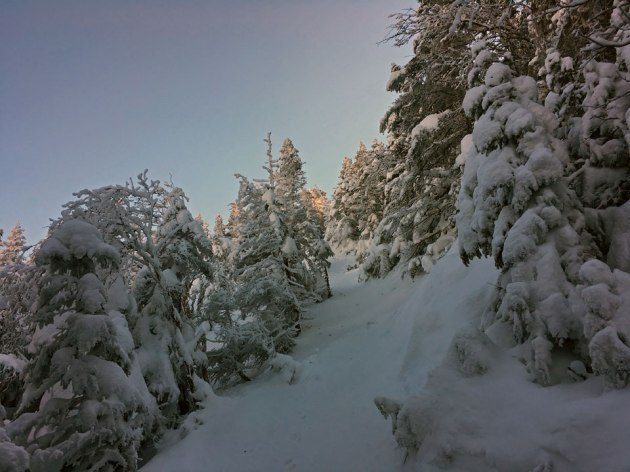 Snow-covered trees on mountain top