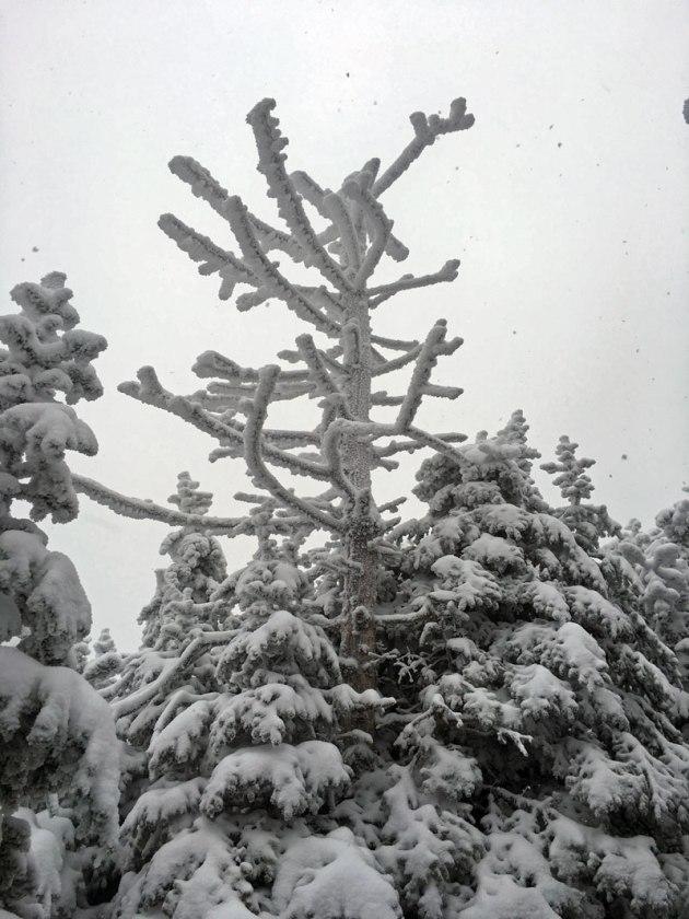 flume-tree