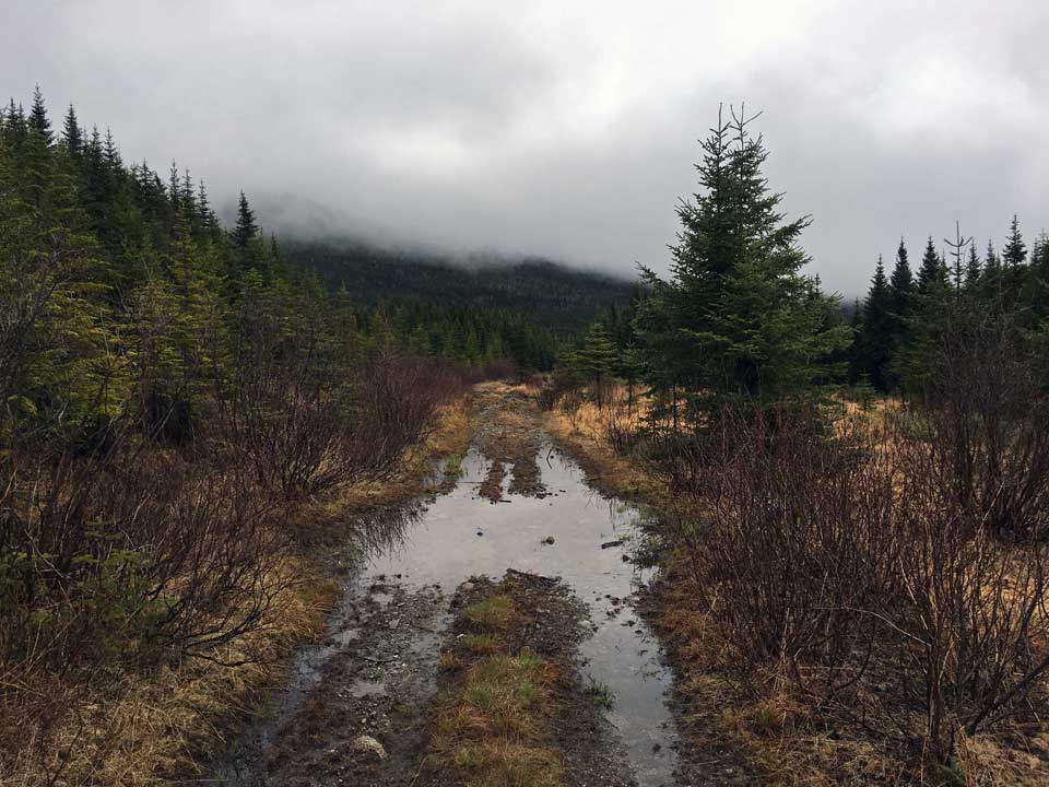 Dirt road through brush and trees, distant mountain fading into clouds