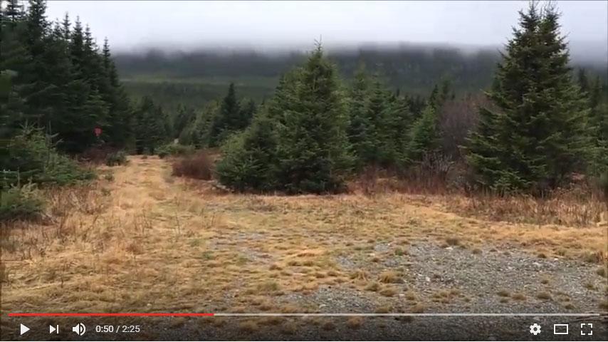 Video of bushwhacking Mount Redington