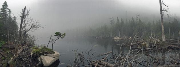 Fog hanging over pond