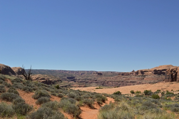 Sand path through desert sage with distant canyon walls