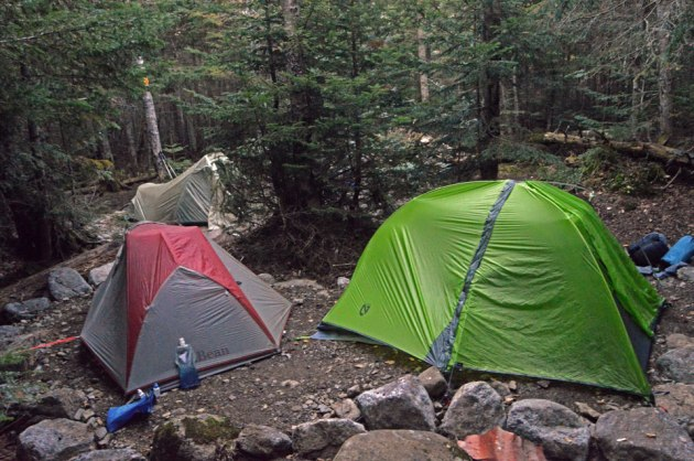 Tents set up in forest